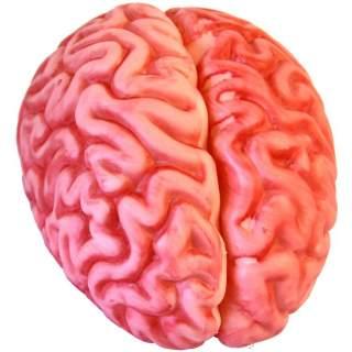 Décoration cervelle